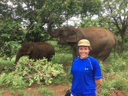 Volunteering with Elephant Valley Project in Cambodia